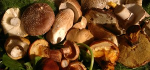 Edible August fungi