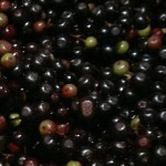 elderberries1