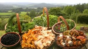 autumn wild food bounty