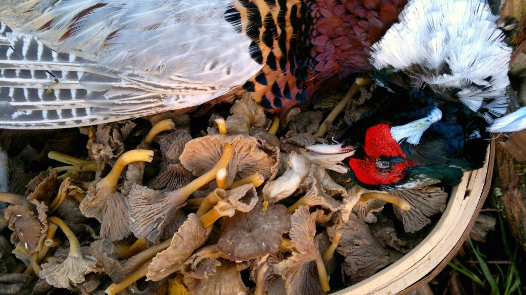 pheasant+winter chants5