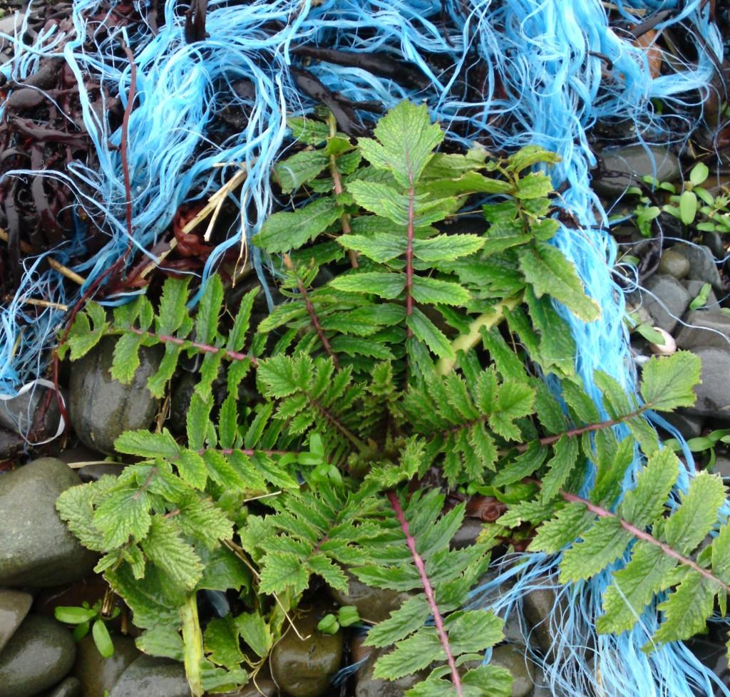 sea radish+rope