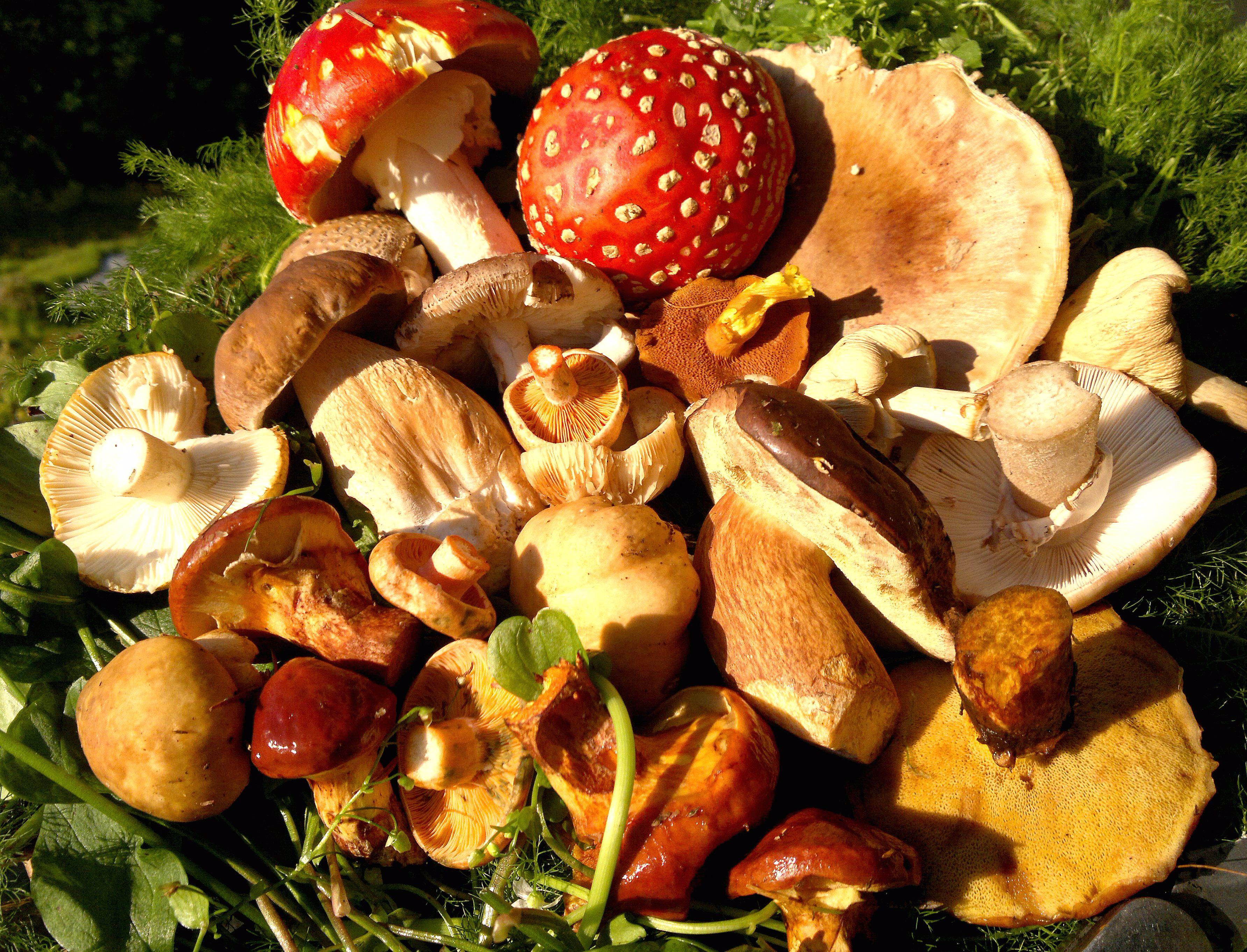 fungi characters