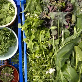 Spring wild foods