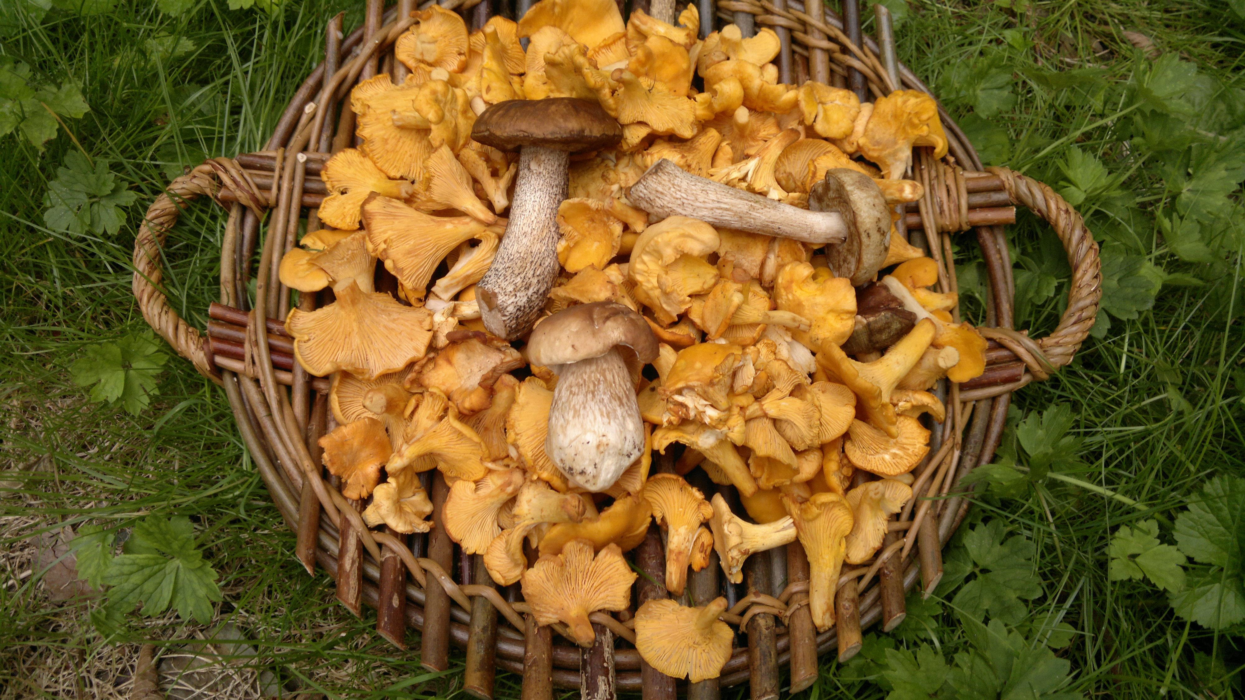 How to pick mushrooms 29
