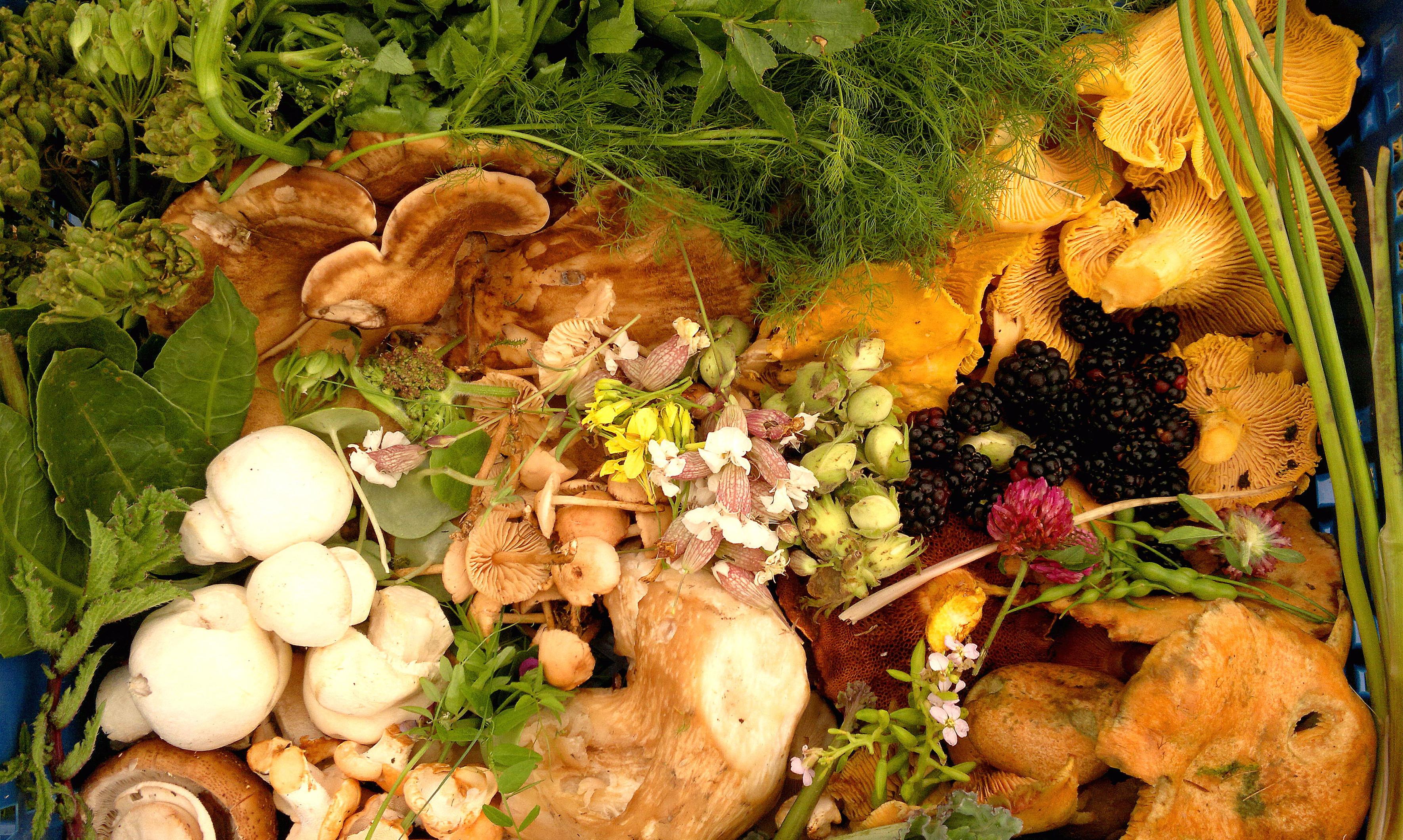 Mixed tray of wild food