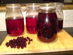 sloe and cloveroot gin