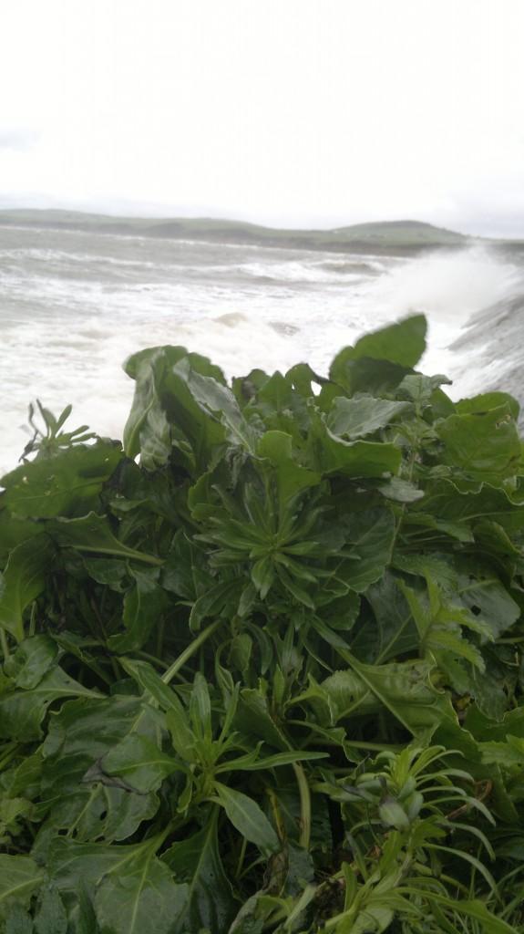 sea beet storm sea
