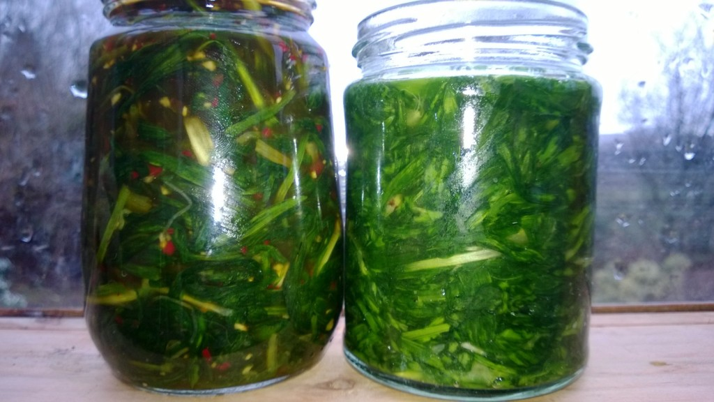 Kimichi style wild leek (L) and lacto-fermented wild garlic (R)