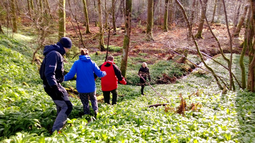 Vast swathes of wild garlic are not uncommon around the UK