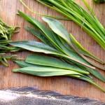sea aster - mature leaves