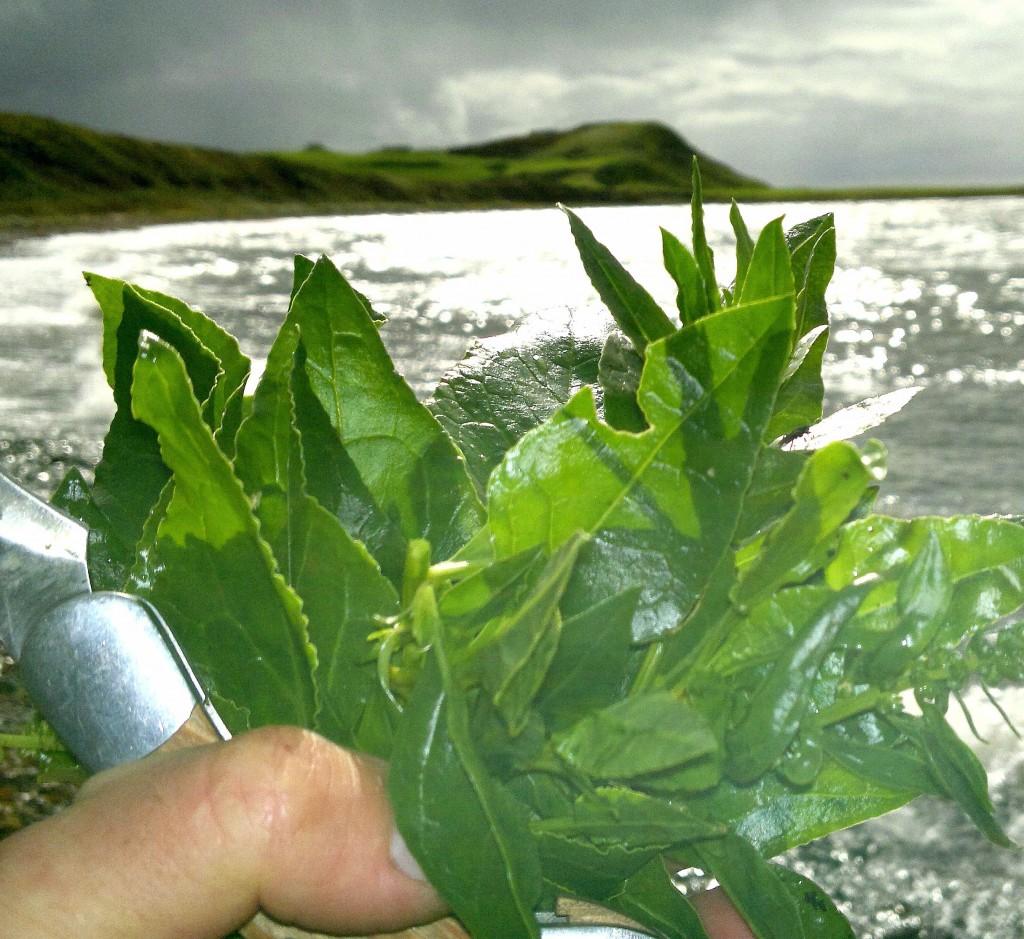 sea beet sun, shore