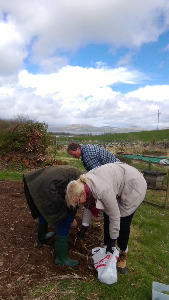Anything was fair game - we visited my friend Steve who has a smallholding near Wigtown and dug some beautiful jerusalem artechokes