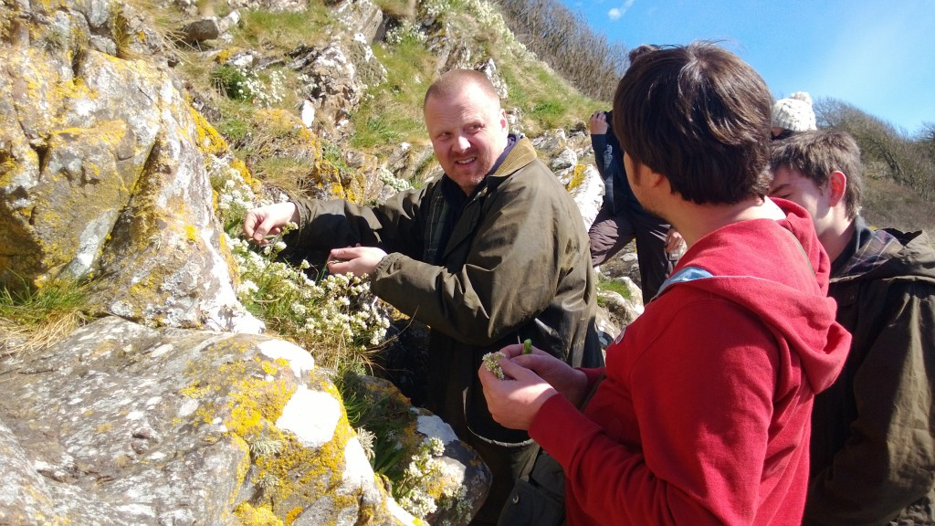 Chris and Gary gathering sea campion shoots and flowers off the cliffs