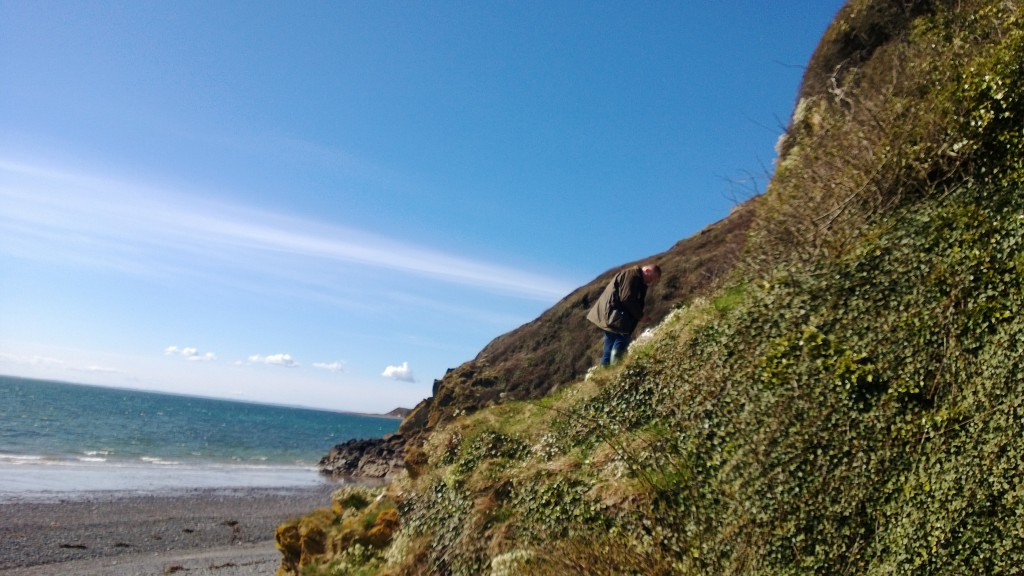 Chris picking scurvy grass and stonecrop off the sea cliff