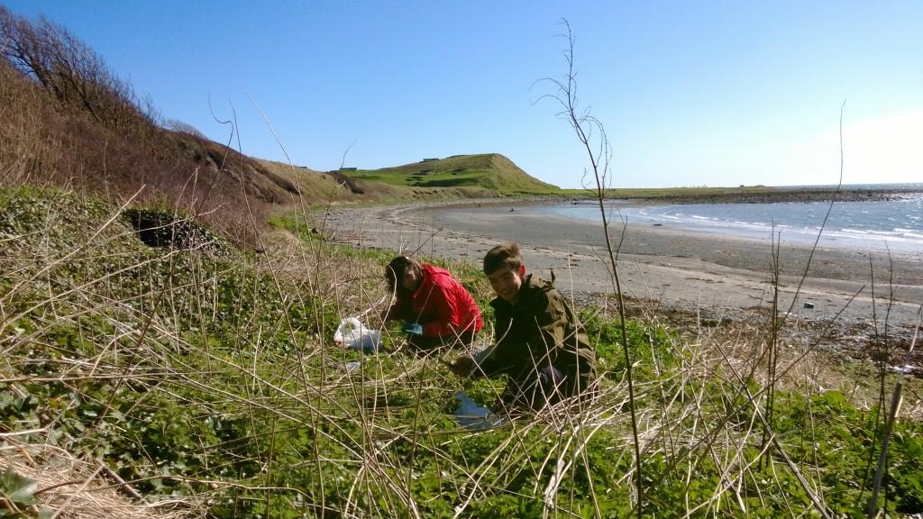 Back to work: Emma and Kieran picking coastal nettle tips