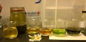 Wild macerations, vinegars, syrups and shrubs