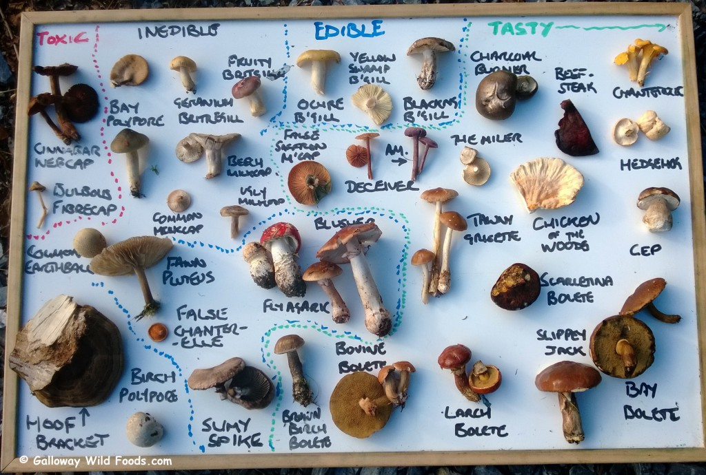 Spectrum of Edibility: Fungi