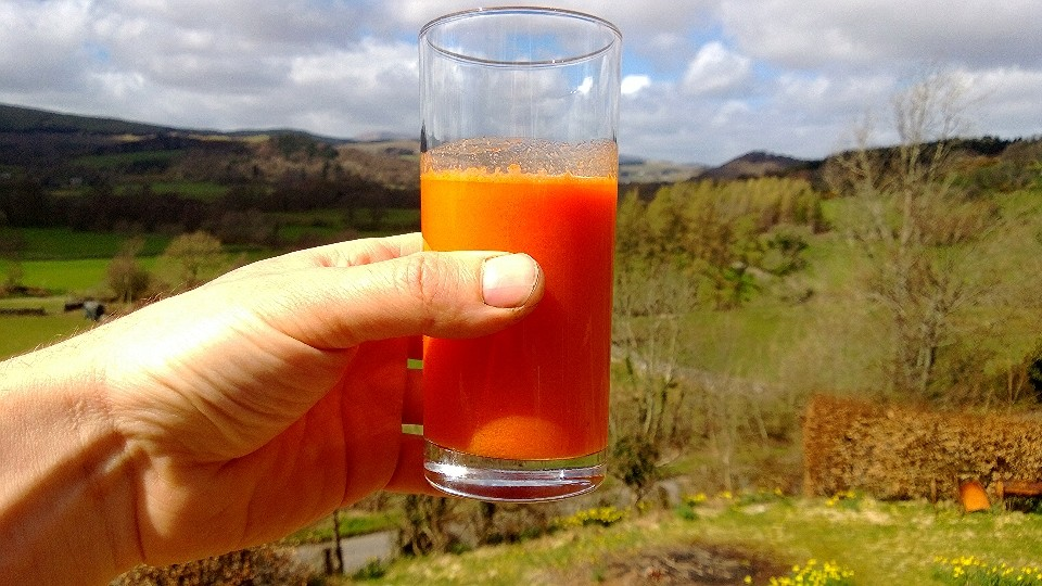 Not just colour sympathy - sea buckthorn juice with carrot juice is one of the finest, tasyiest health drinks