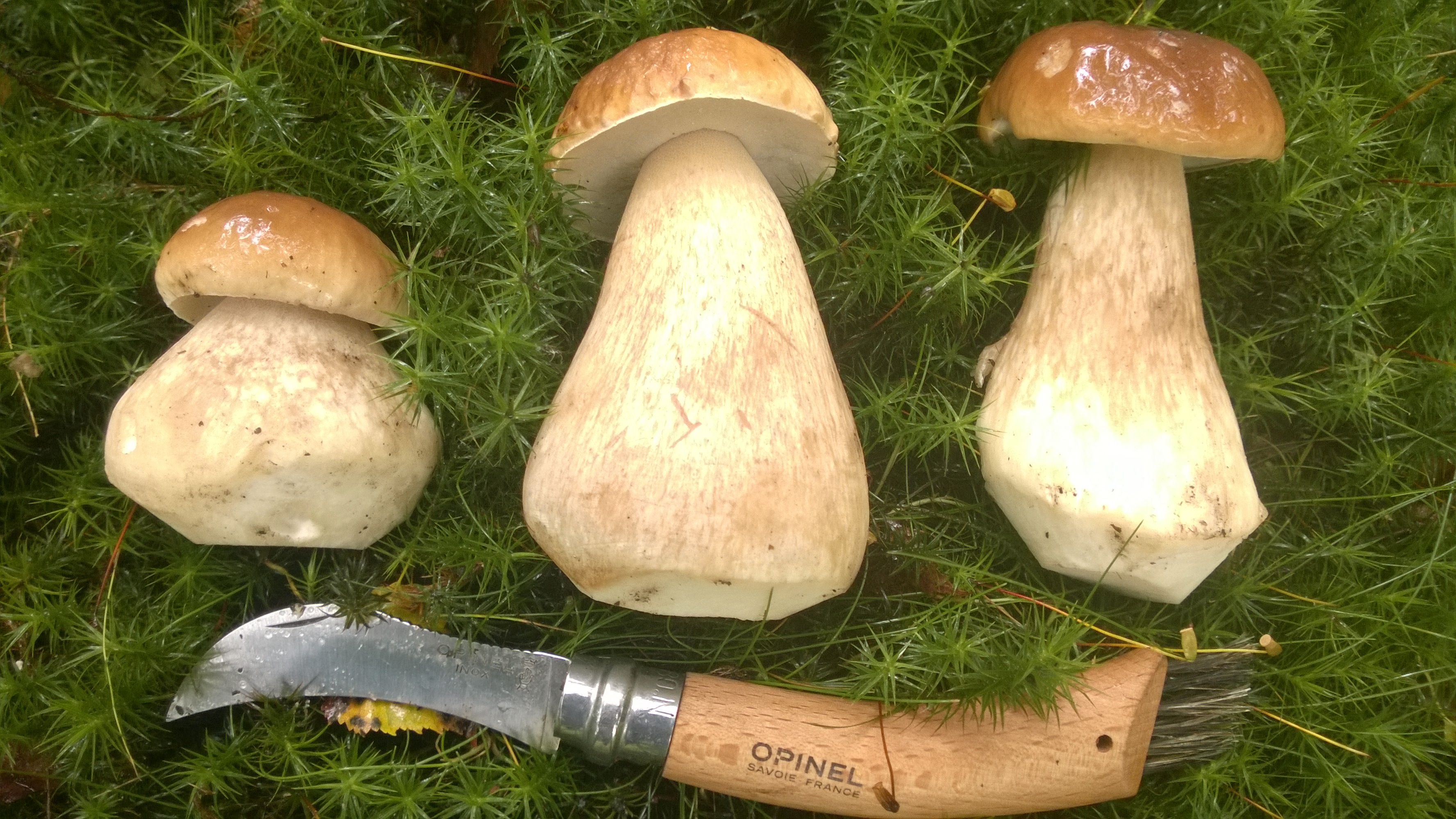 Ceps trimmed