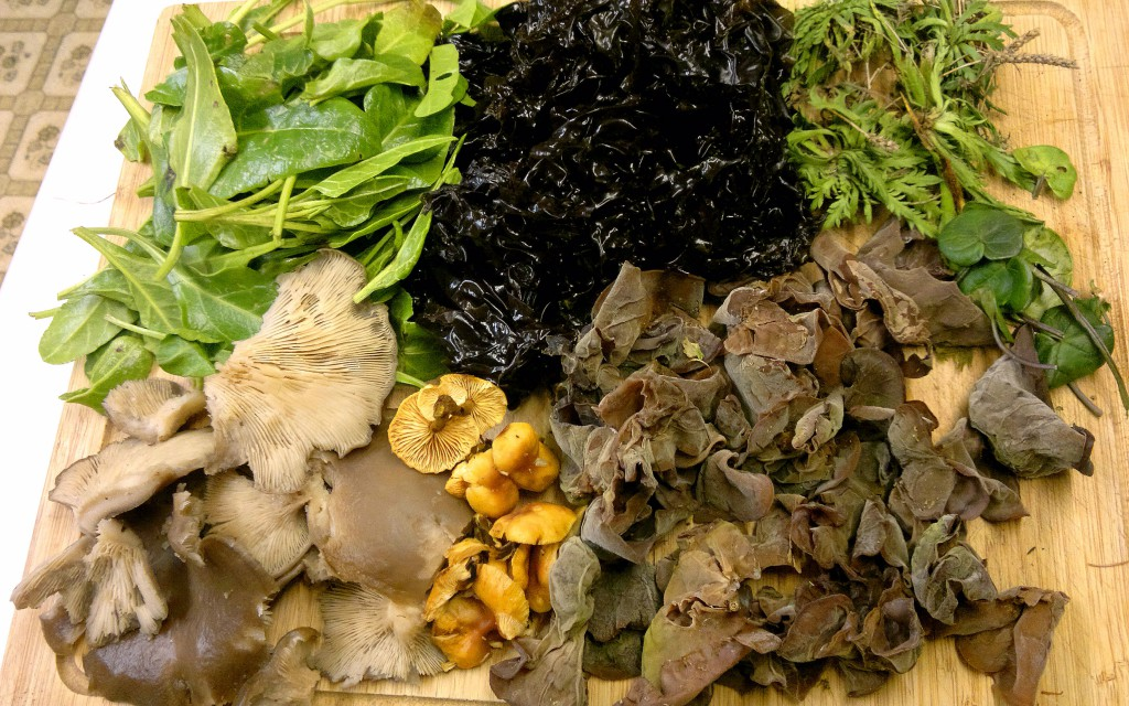 laver, foraging, wild food, winter, sea beet, oyster mushrooms, velvet shank, jelly ear, scurvy grass, stagshorn plantain