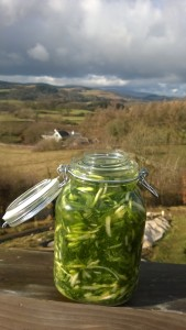 Fermented wild garlic