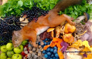 Autumn wild foods with roadkill squirrel