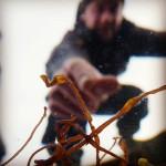 seaweed underwater tubular weed