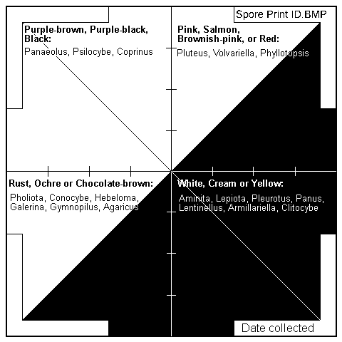 Handy printable spore print chart, with notes on spore colour groupings. Source: Wiki Commons
