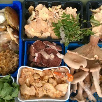 Edible wild mushrooms Image ©GallowayWildFoods.com